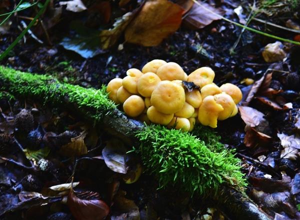 28ix2020  lesne zycie, zdjęcie 9/16