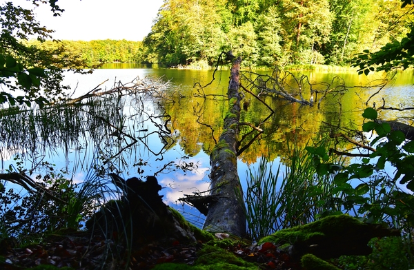 28ix2020  lesne zycie, zdjęcie 10/16
