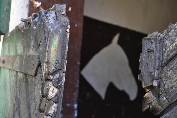 splonal mustang, zdjęcie 10/23