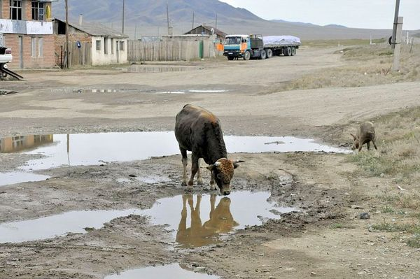 stepy mongolii oczami stefana piosika, zdjęcie 2/2