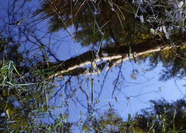geopark uk muzakowa , zdjęcie 85/88