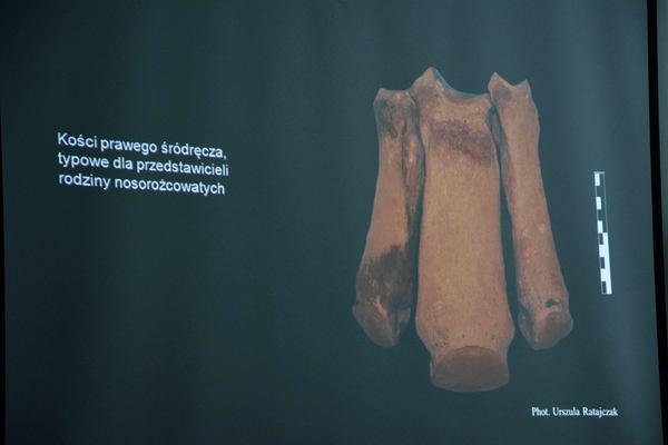 a moze nosorozec wypromuje nam gorzow, zdjęcie 9/26