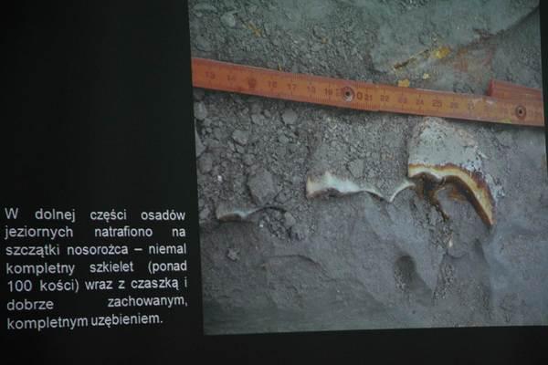 a moze nosorozec wypromuje nam gorzow, zdjęcie 11/26