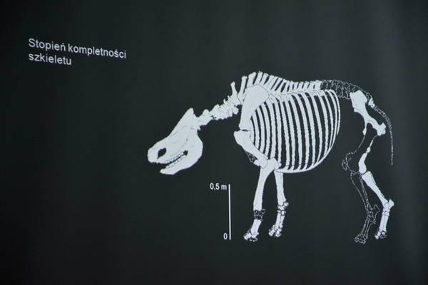 a moze nosorozec wypromuje nam gorzow, zdjęcie 14/26
