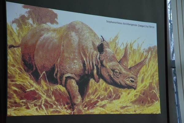 a moze nosorozec wypromuje nam gorzow, zdjęcie 15/26