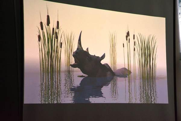 a moze nosorozec wypromuje nam gorzow, zdjęcie 16/26
