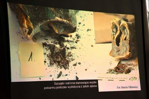 a moze nosorozec wypromuje nam gorzow, zdjęcie 18/26