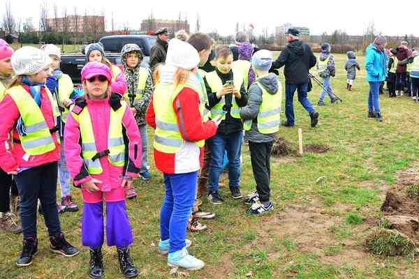 posadzili drzewa potrzebuja oswietleniabr , zdjęcie 2/20