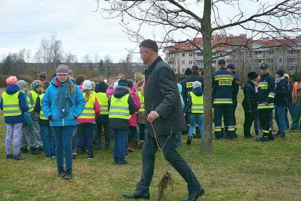 posadzili drzewa potrzebuja oswietleniabr , zdjęcie 3/20