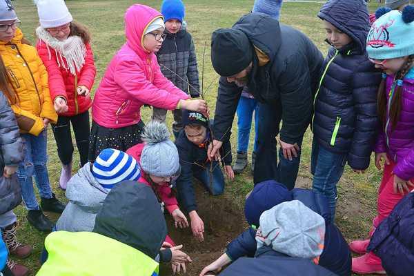 posadzili drzewa potrzebuja oswietleniabr , zdjęcie 4/20