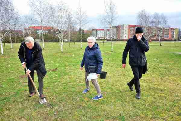 posadzili drzewa potrzebuja oswietleniabr , zdjęcie 13/20