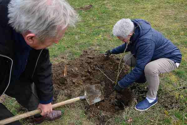 posadzili drzewa potrzebuja oswietleniabr , zdjęcie 14/20