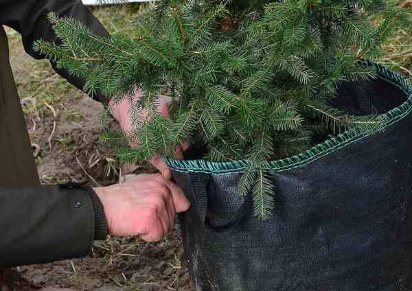 posadzili drzewa potrzebuja oswietleniabr , zdjęcie 16/20