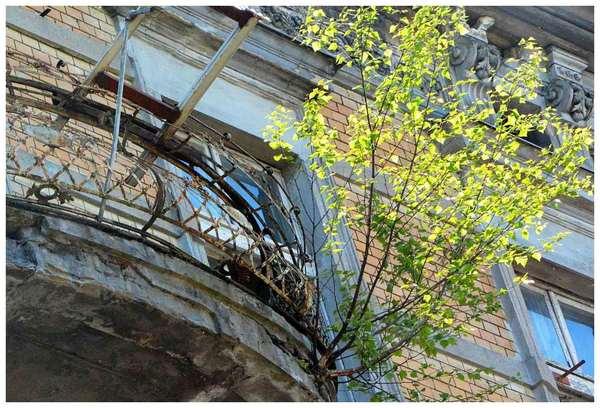 drzewa wyrastaja z balkonow, zdjęcie 4/4