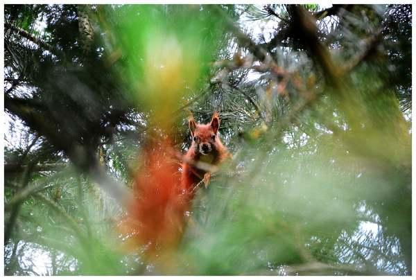 piekny rudzielec ale, zdjęcie 4/32