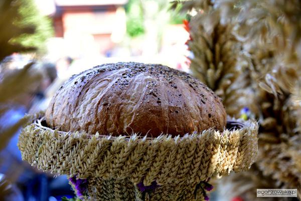 podziekowali za kromke chleba, zdjęcie 22/44