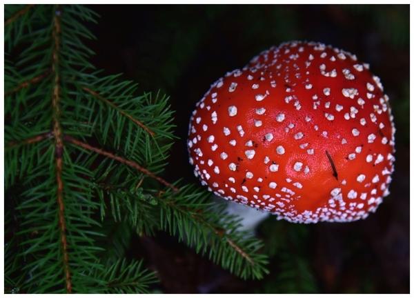 radosny sezon grzybowy , zdjęcie 2/33