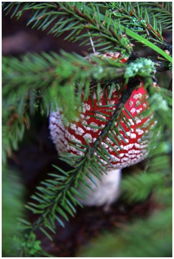 radosny sezon grzybowy , zdjęcie 3/33
