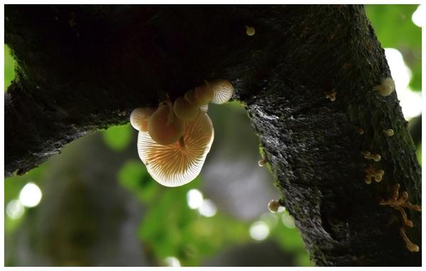 radosny sezon grzybowy , zdjęcie 26/33