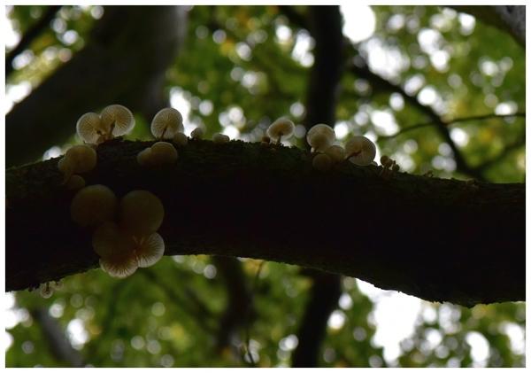 radosny sezon grzybowy , zdjęcie 28/33