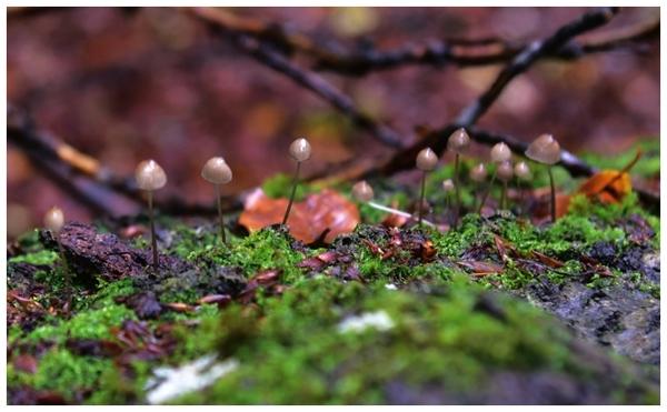 radosny sezon grzybowy , zdjęcie 32/33