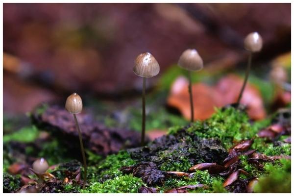 radosny sezon grzybowy , zdjęcie 33/33